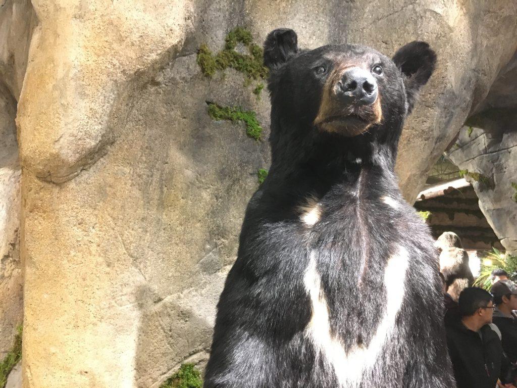 Bear taxidermy at Bass Pro Shops