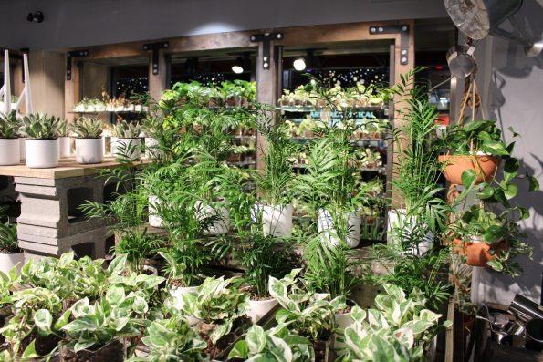 MUJI Vancouver plants