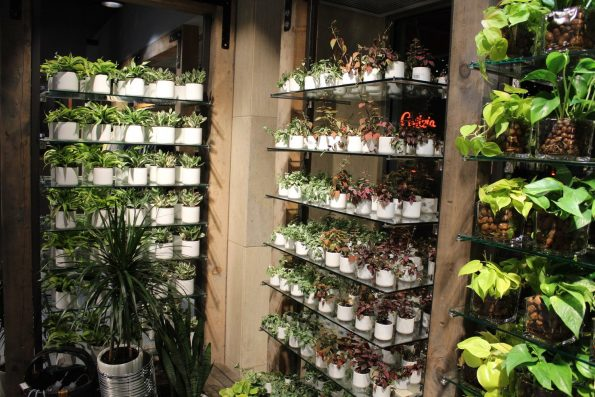 MUJI plants