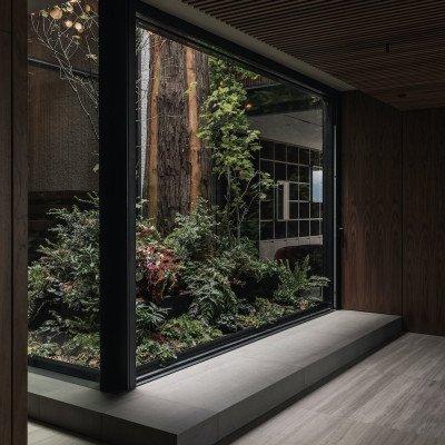 Red cedar tree in atrium