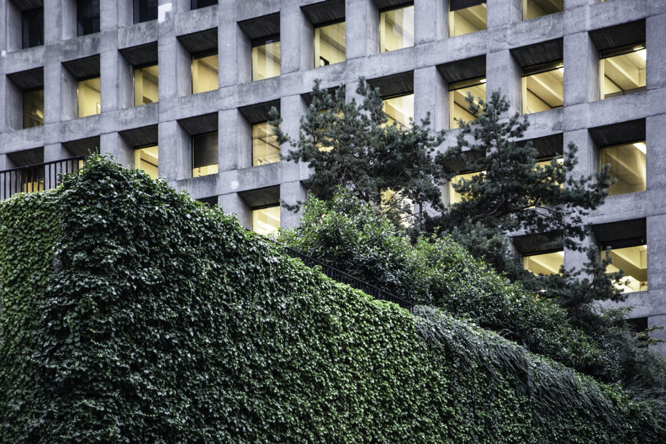 Ivy growing on the parking structure